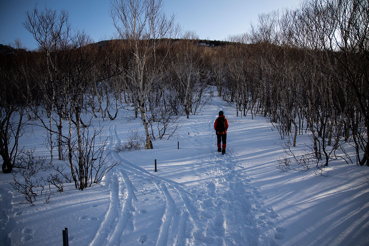 スキーの跡もある