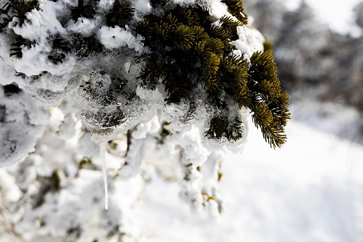 葉っぱに付いた氷がツブツブとした感じ