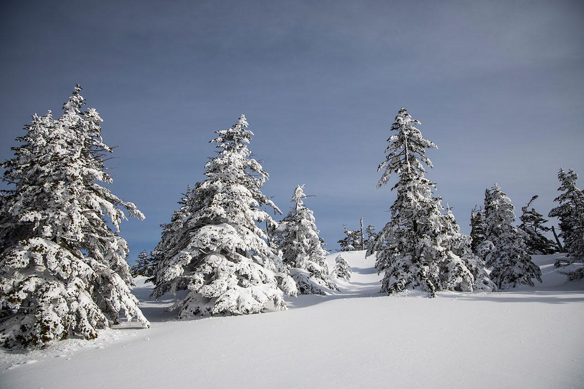 木の東側には雪が付着している