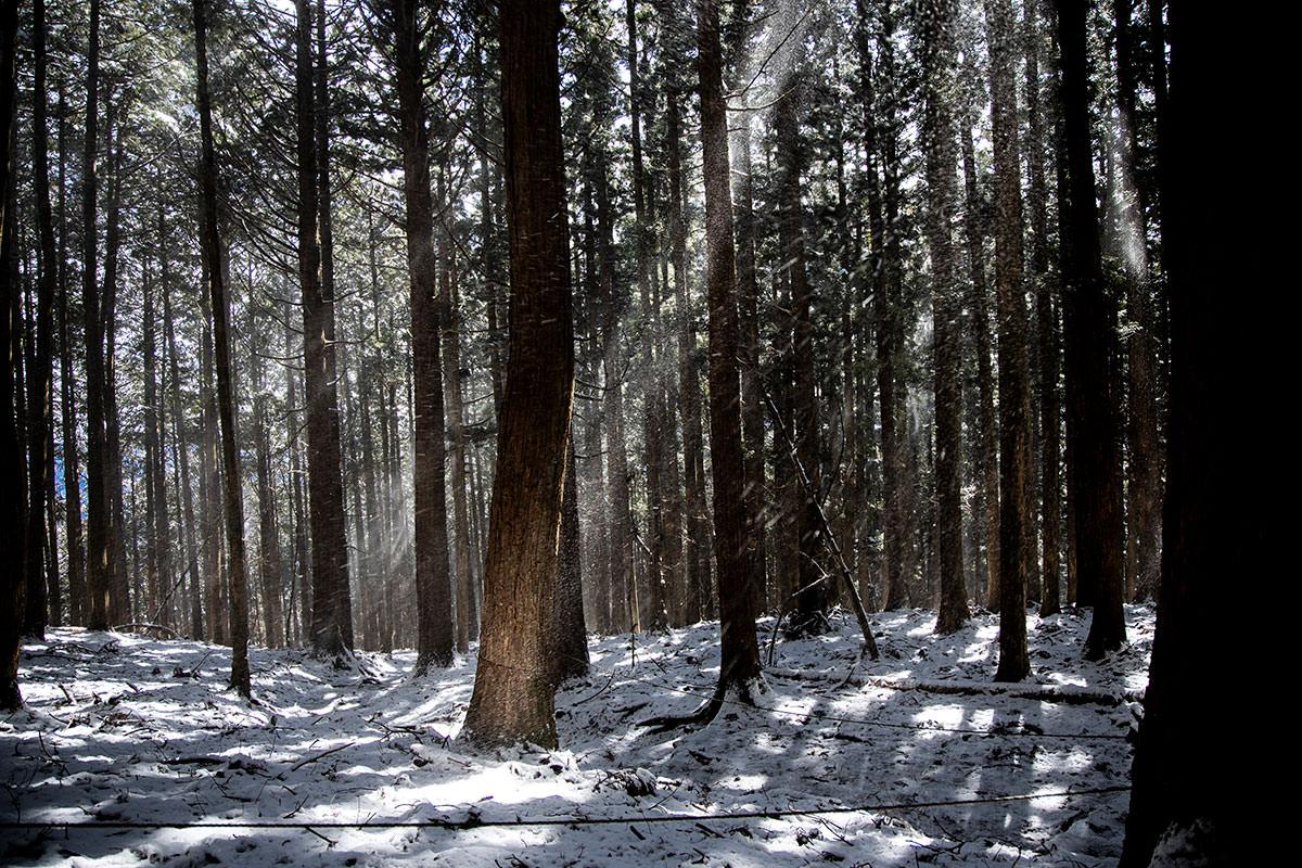 陽が射したところに雪がパラパラ落ちてくる