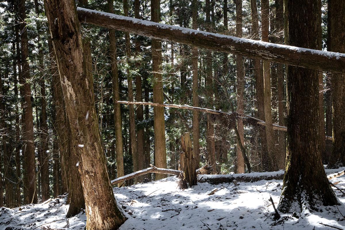 森の中をあちこち見ながら下りる