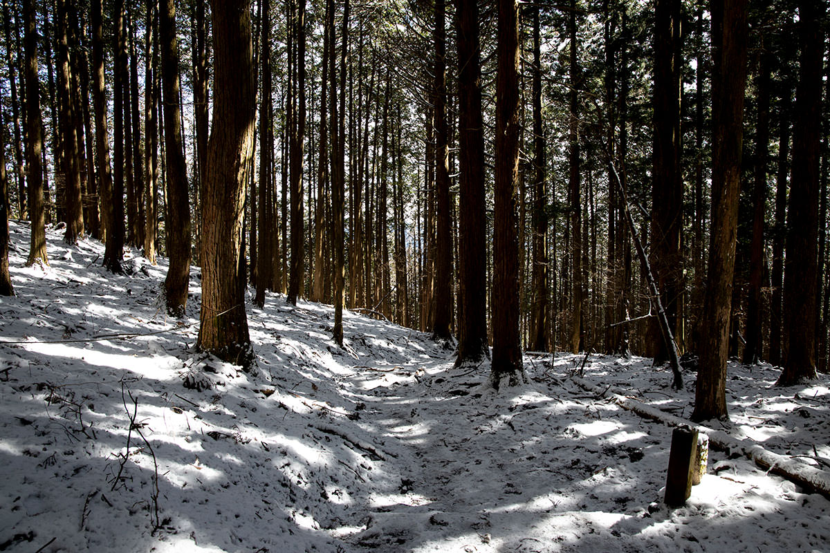 雪は少なめで歩きやすい