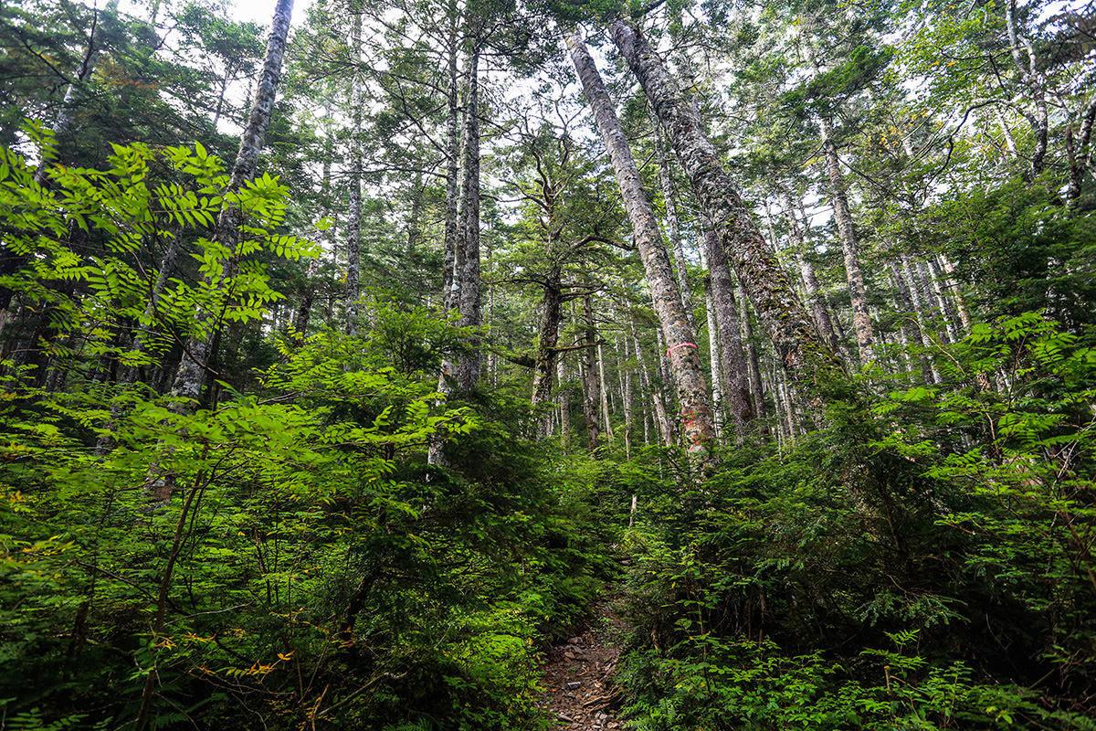 【蝶ヶ岳】登山百景-まわりには木がいっぱい