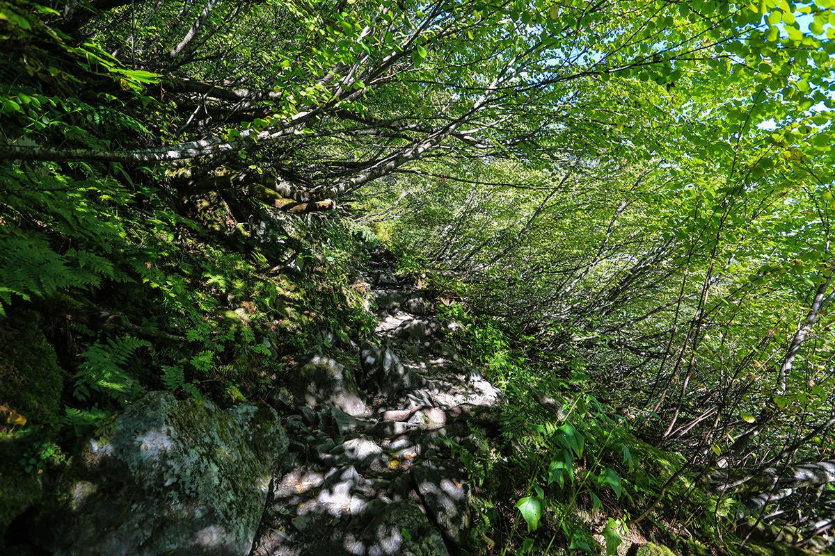 【蝶ヶ岳】登山百景-緑の中を登ってく