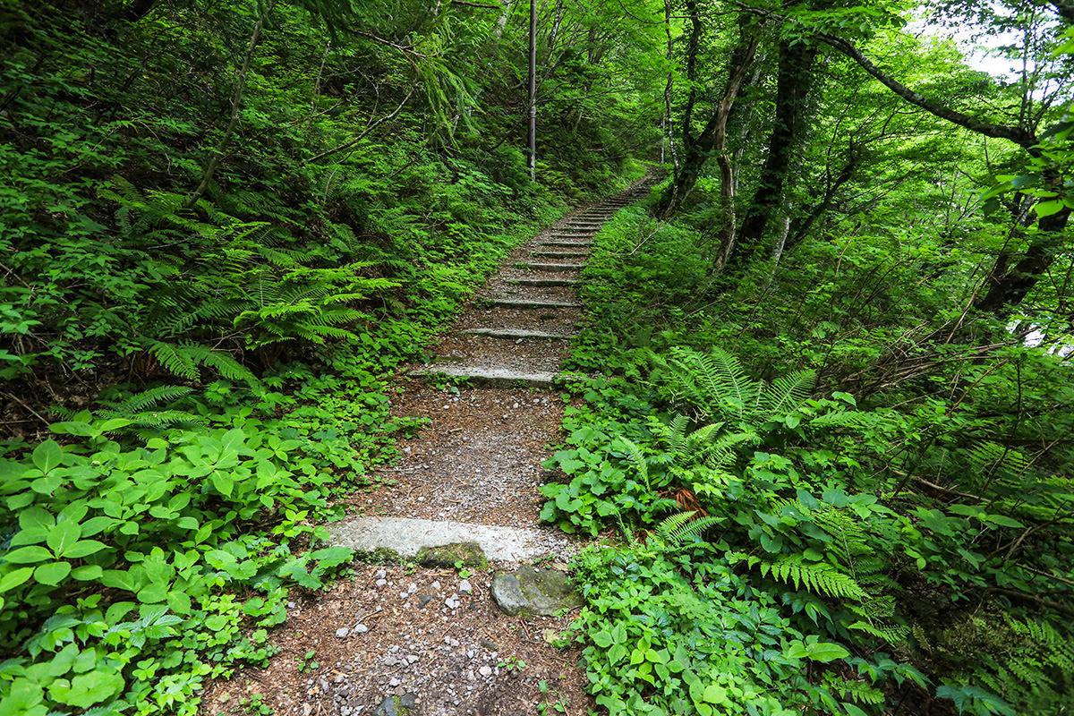 【大山 夏山登山道】登山百景-歩きやすい