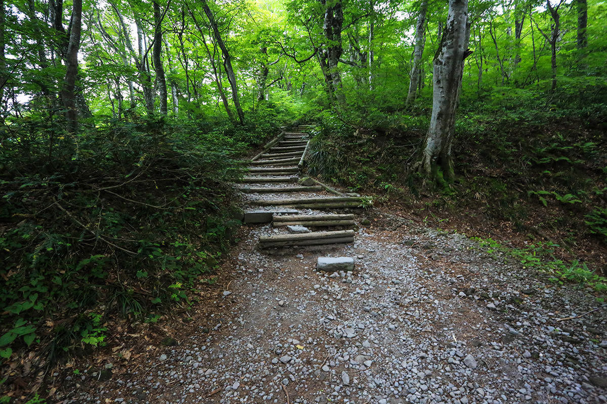 【大山 夏山登山道】登山百景-ずっと階段が続く