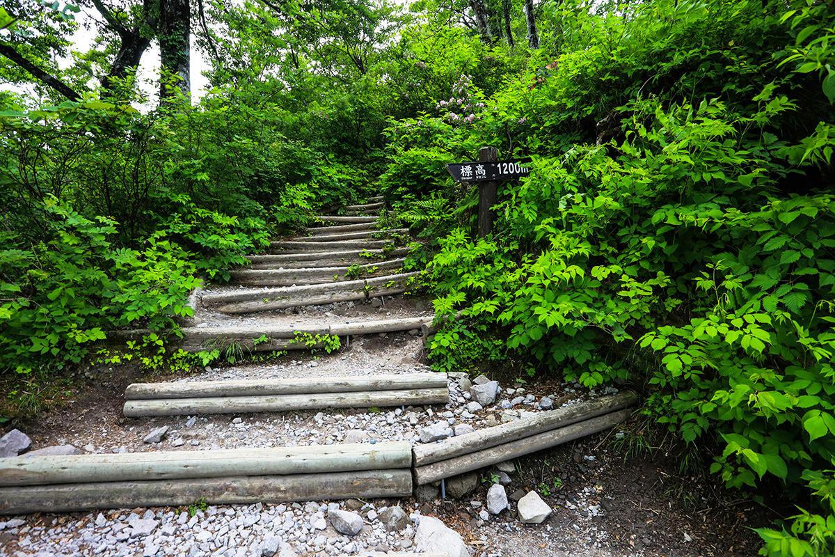 【大山 夏山登山道】登山百景-1200m地点