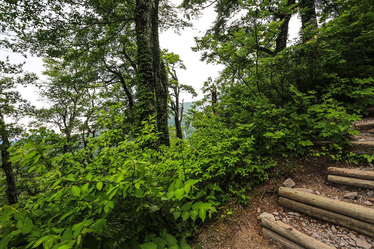 【大山 夏山登山道】登山百景-木の間に稜線が見える