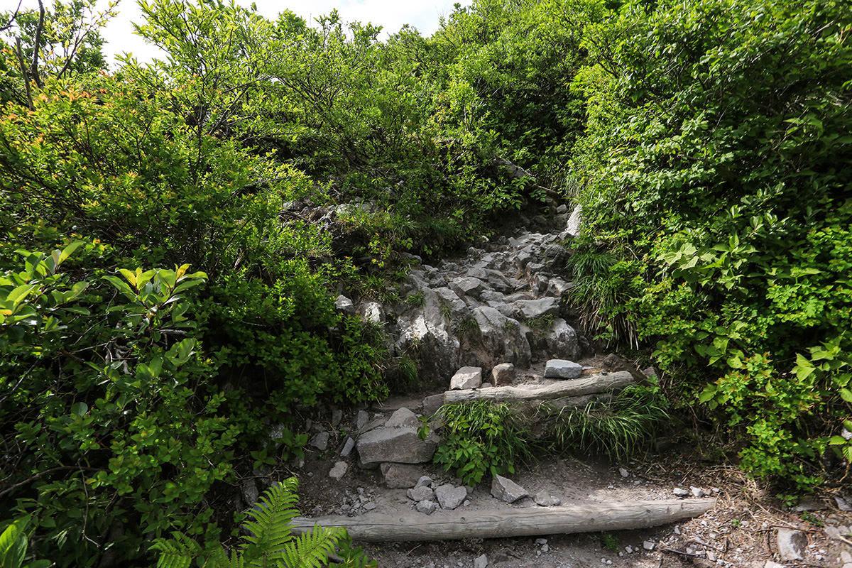 【大山 夏山登山道】登山百景-けっこう石が多い