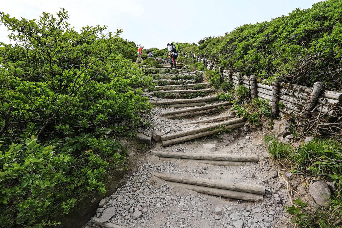 【大山 夏山登山道】登山百景-木が低くなった