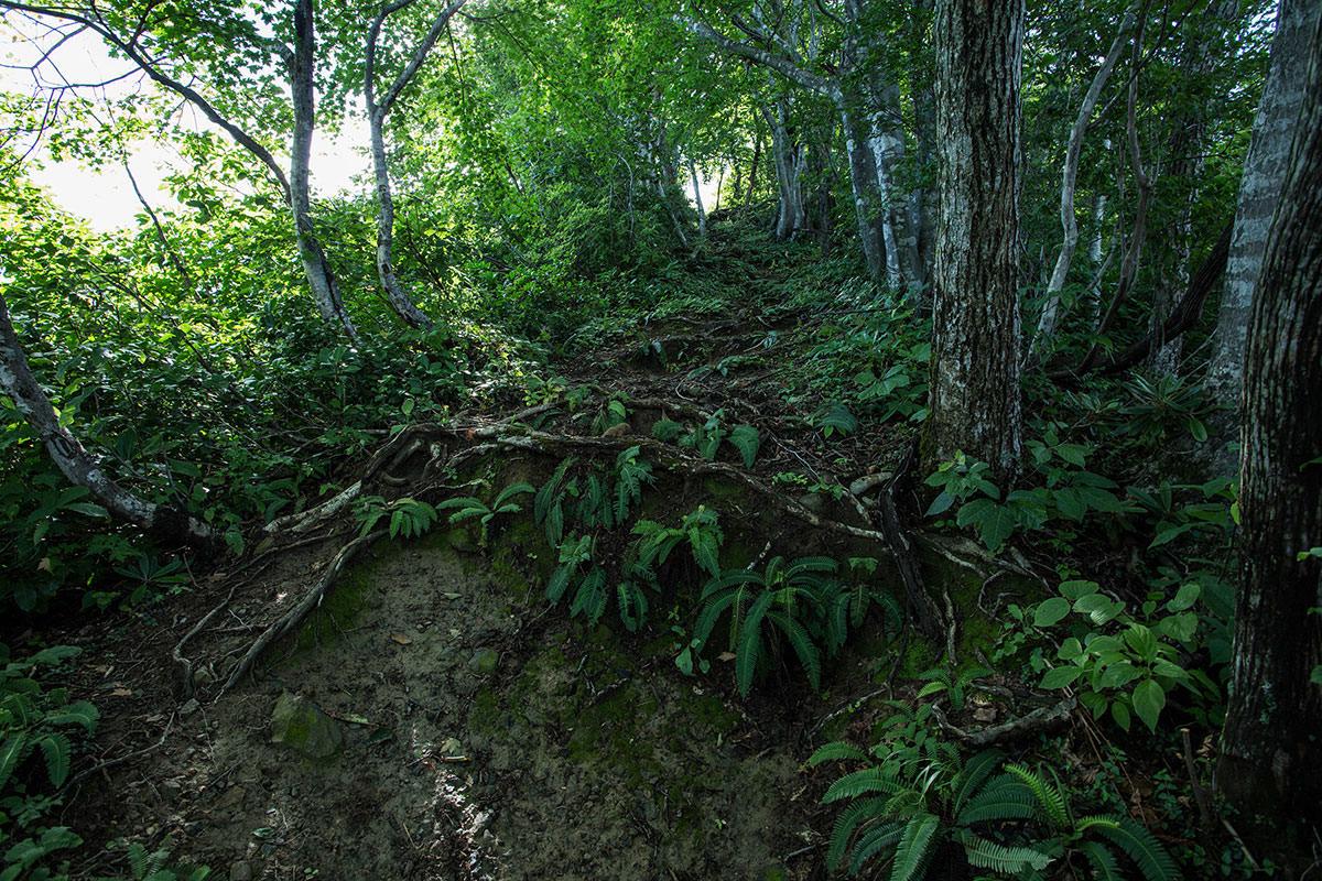 木の根もビッシリ