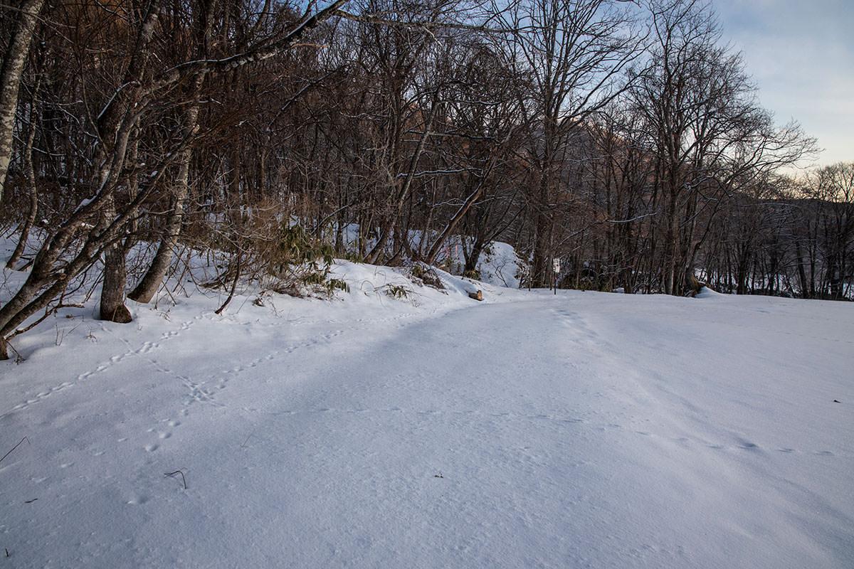 高妻山-弥勒尾根新道から林の中へ