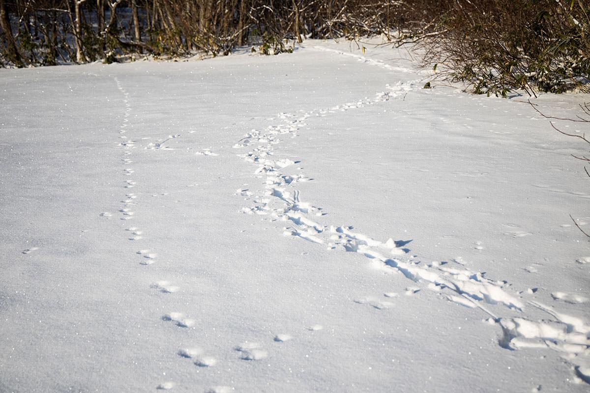 高妻山-大きな踏み跡を見つけた