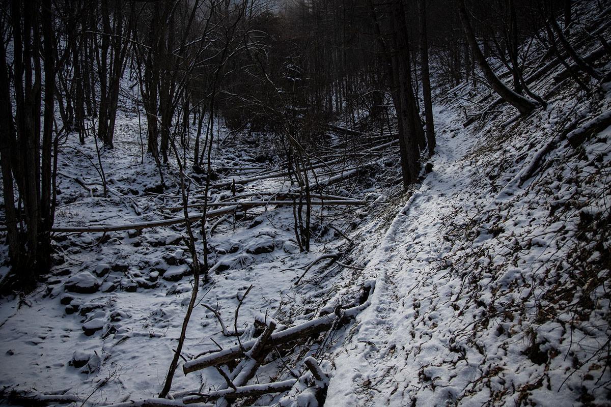 沢沿いの登山道が続く