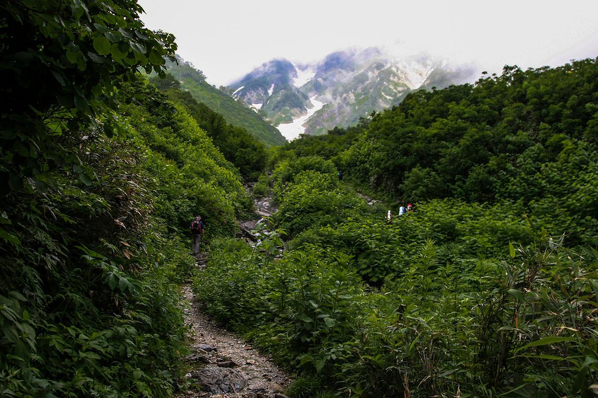 登山道が狭くなる