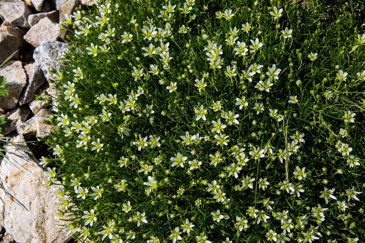 小さい花が咲いている