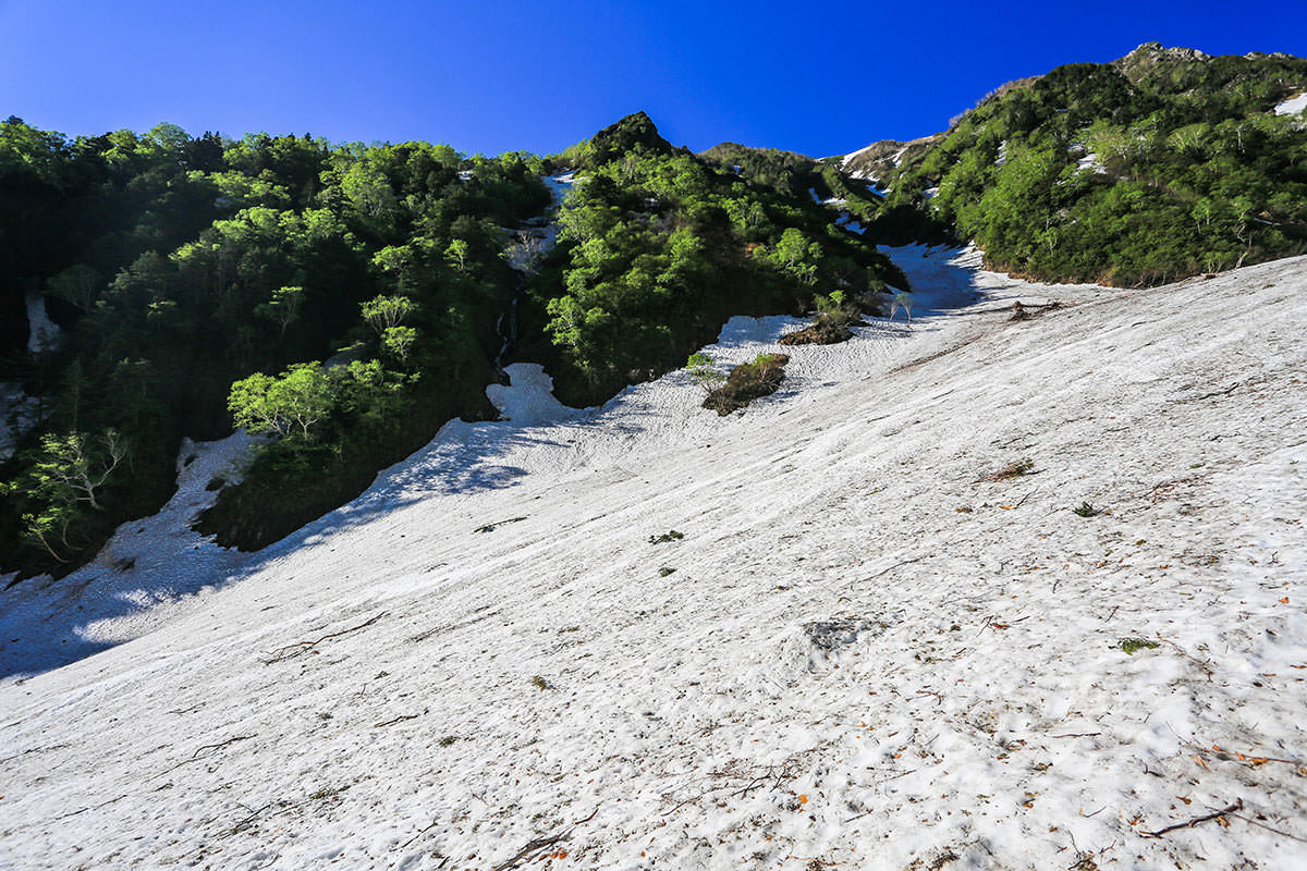 【針ノ木岳】登山百景-周りは緑いっぱい