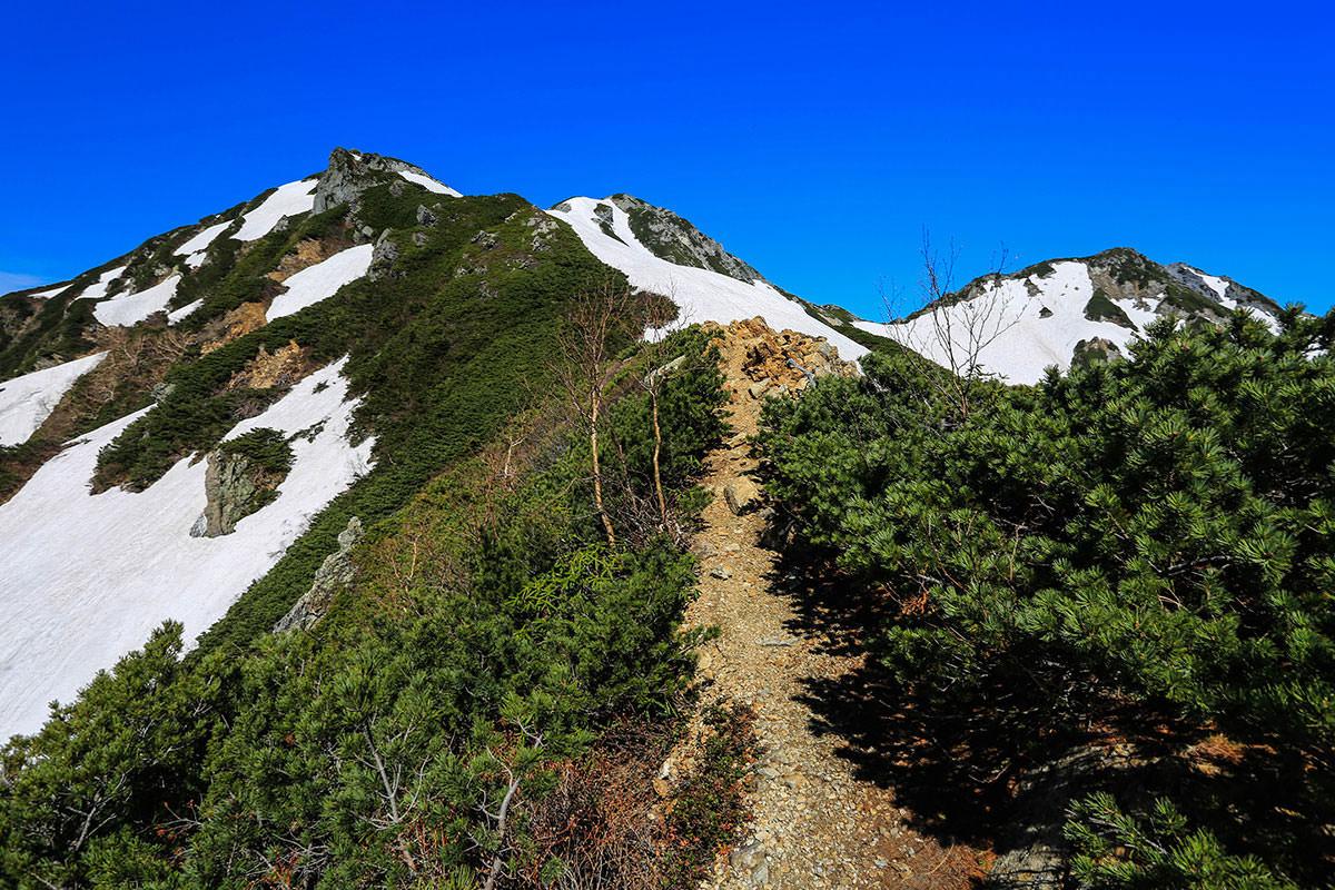 【針ノ木岳】登山百景-土の上は歩きやすい
