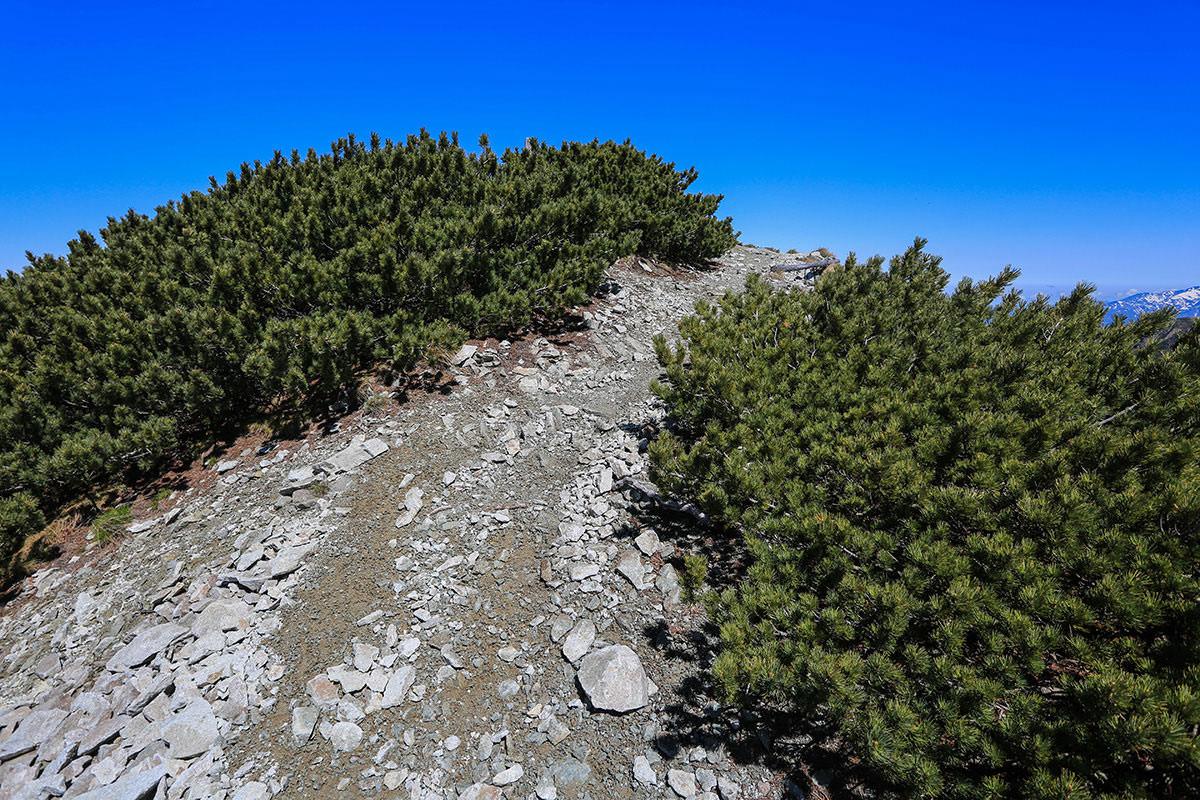 【針ノ木岳】登山百景-雪を越え山頂はそこ