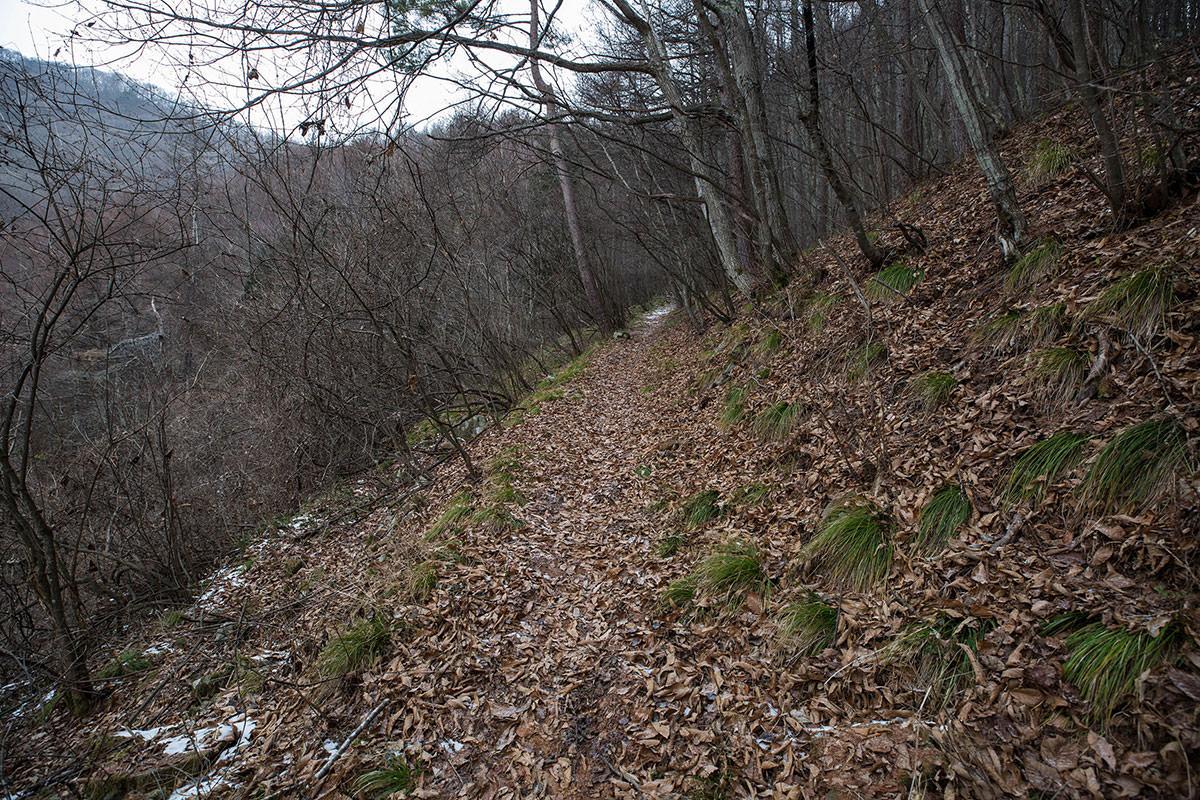 【聖山】登山百景-緩やかに登っていく