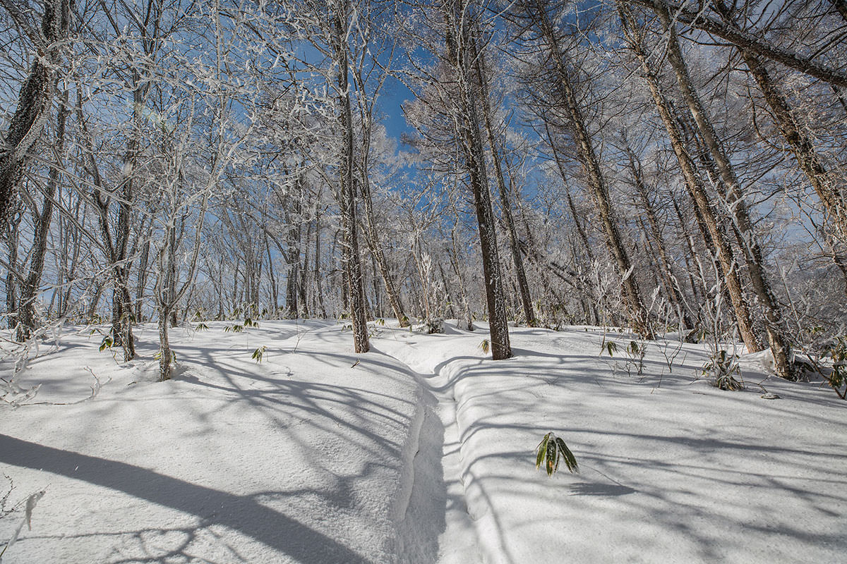 【聖山】登山百景-霧氷が散る中を登る