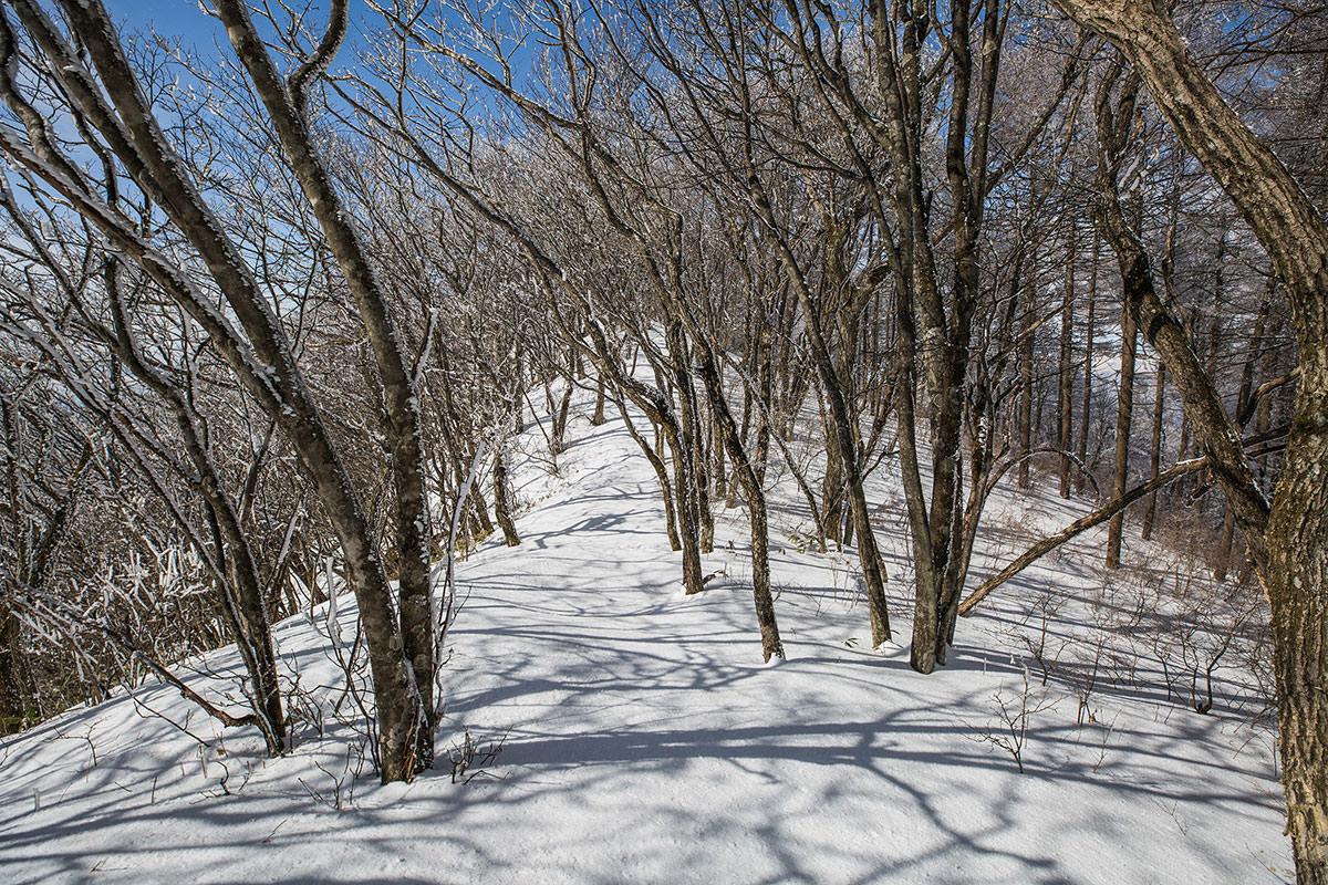 【聖山】登山百景-踏み跡が消えている