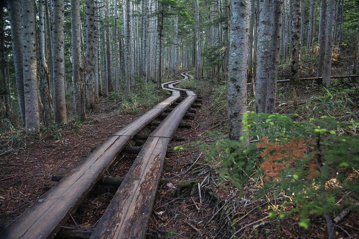 木道が続く