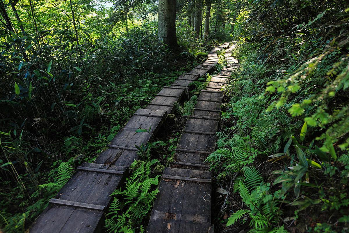 【燧ヶ岳】登山百景-階段状に下りていく