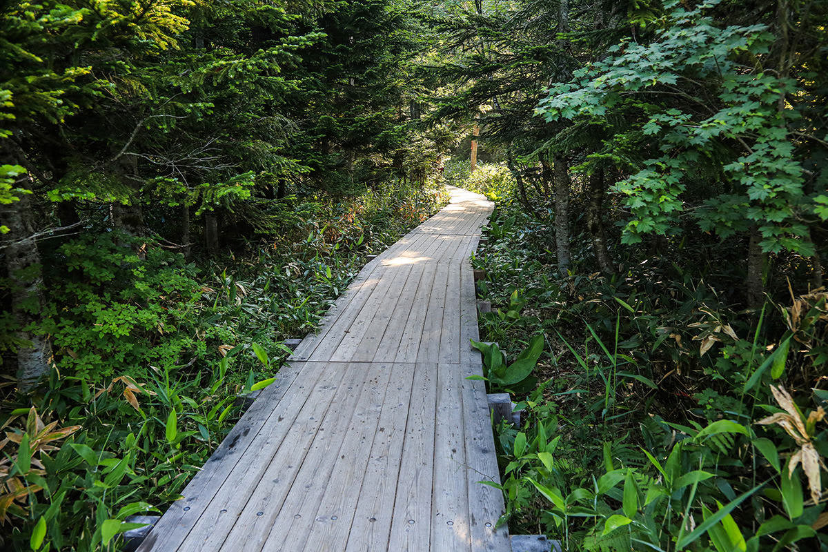 尾瀬沼の木道を歩く