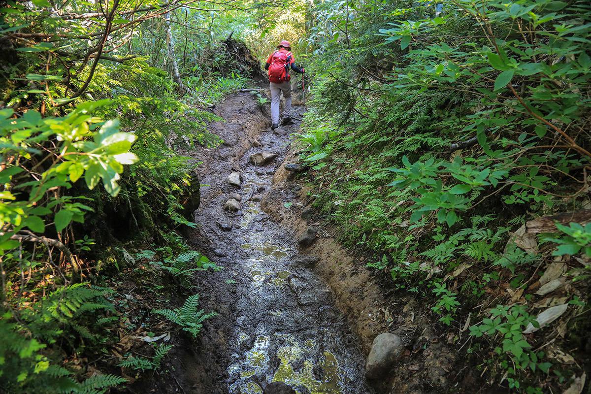 登山道はドロドロ