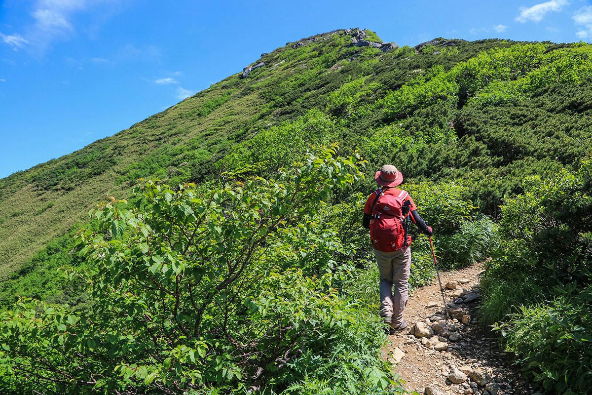 【燧ヶ岳】登山百景-傾斜には白い花がいっぱい