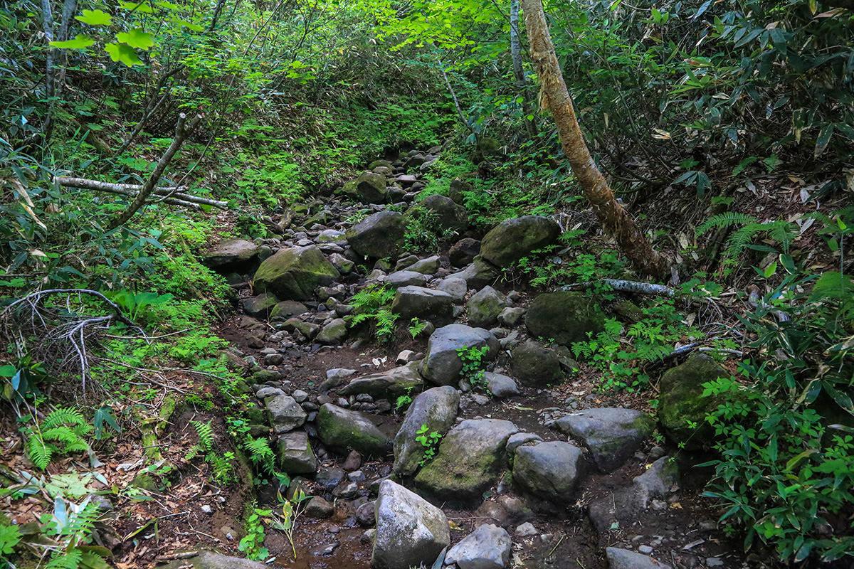 岩の登り坂もある