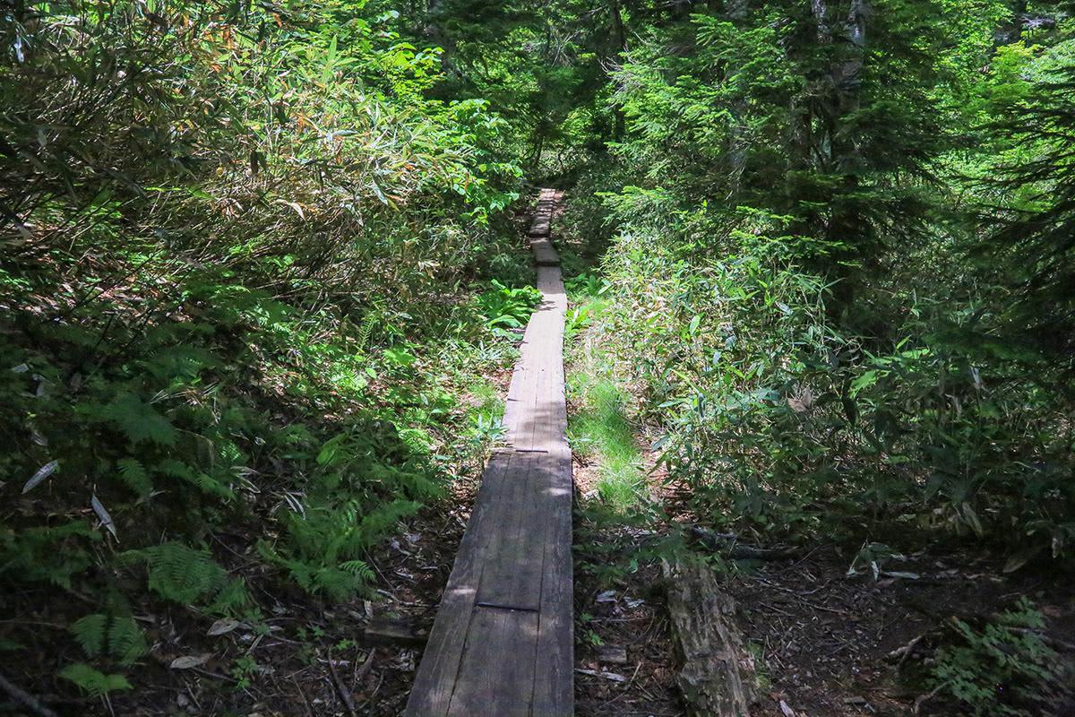 【燧ヶ岳】登山百景-木道を繰り返す