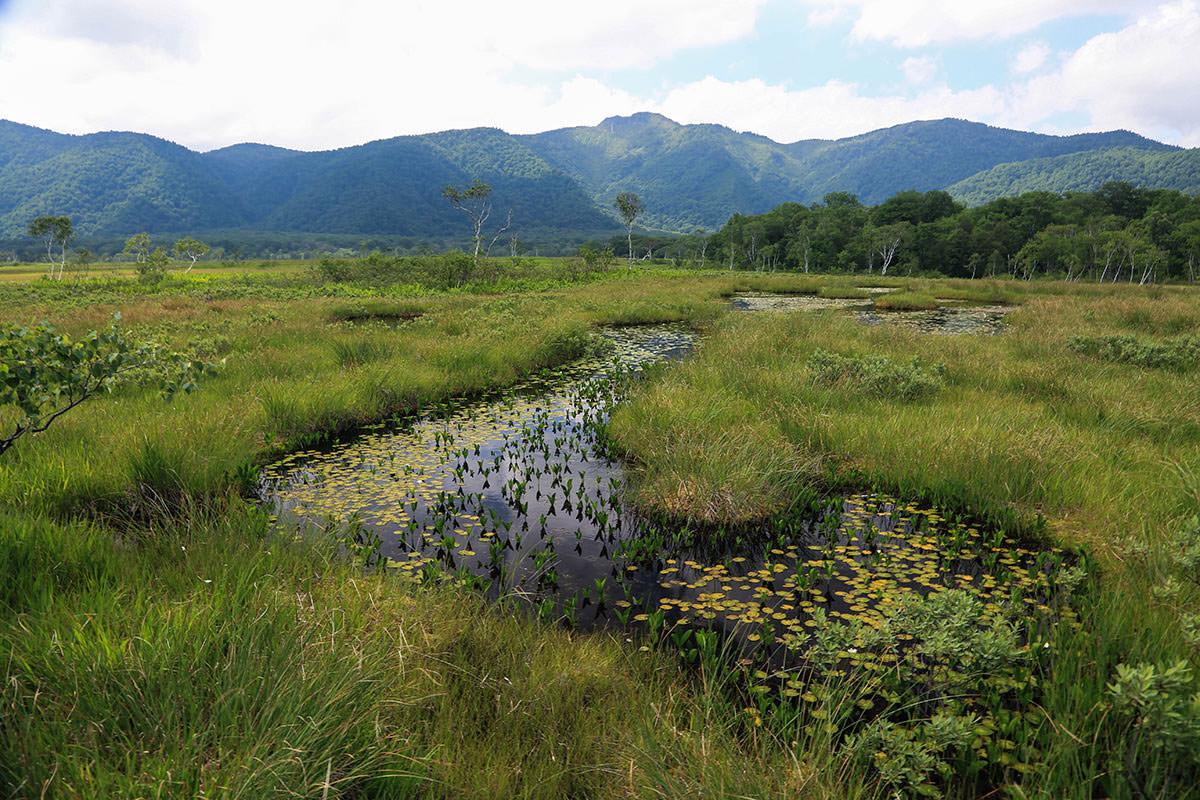 【燧ヶ岳】登山百景-水面と植物を楽しむ