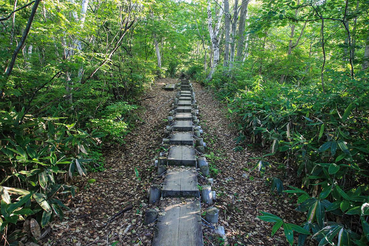 【火打山】登山百景-木の上を歩く
