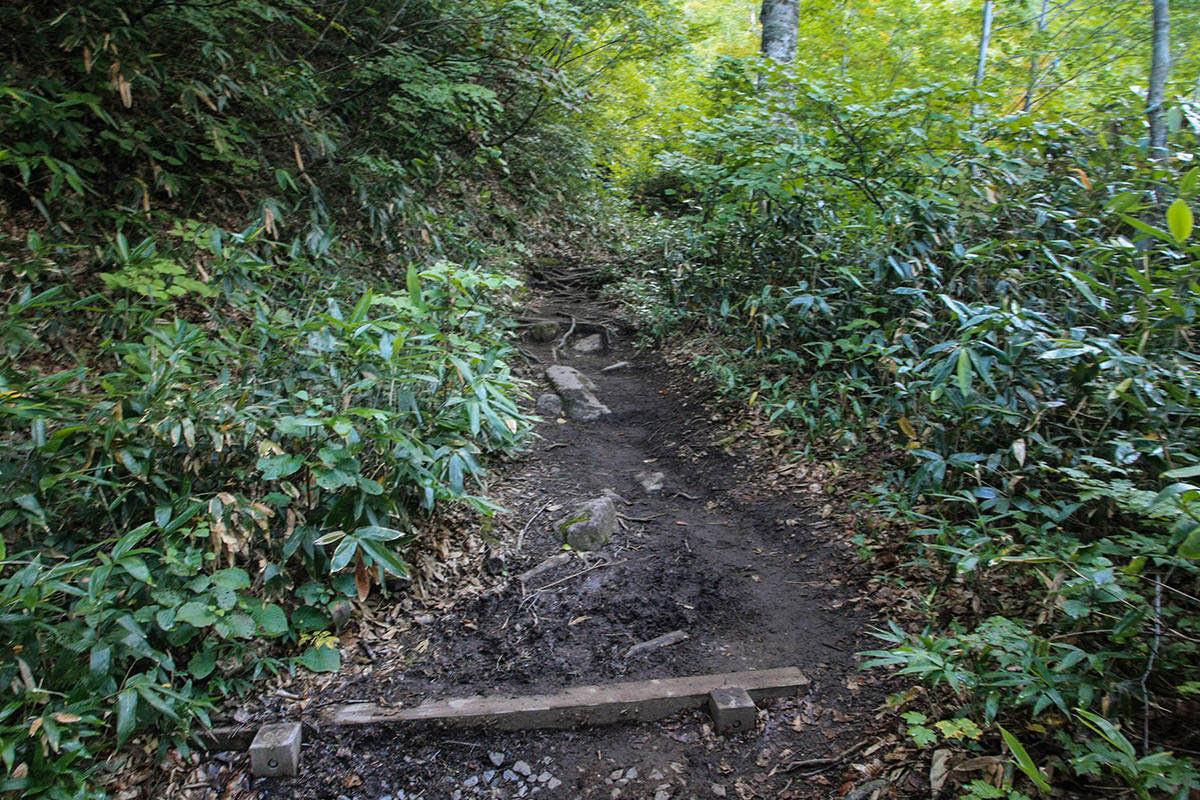 【火打山】登山百景-道はいったん土になる