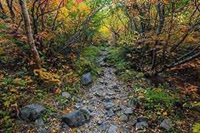 紅葉の中を歩く