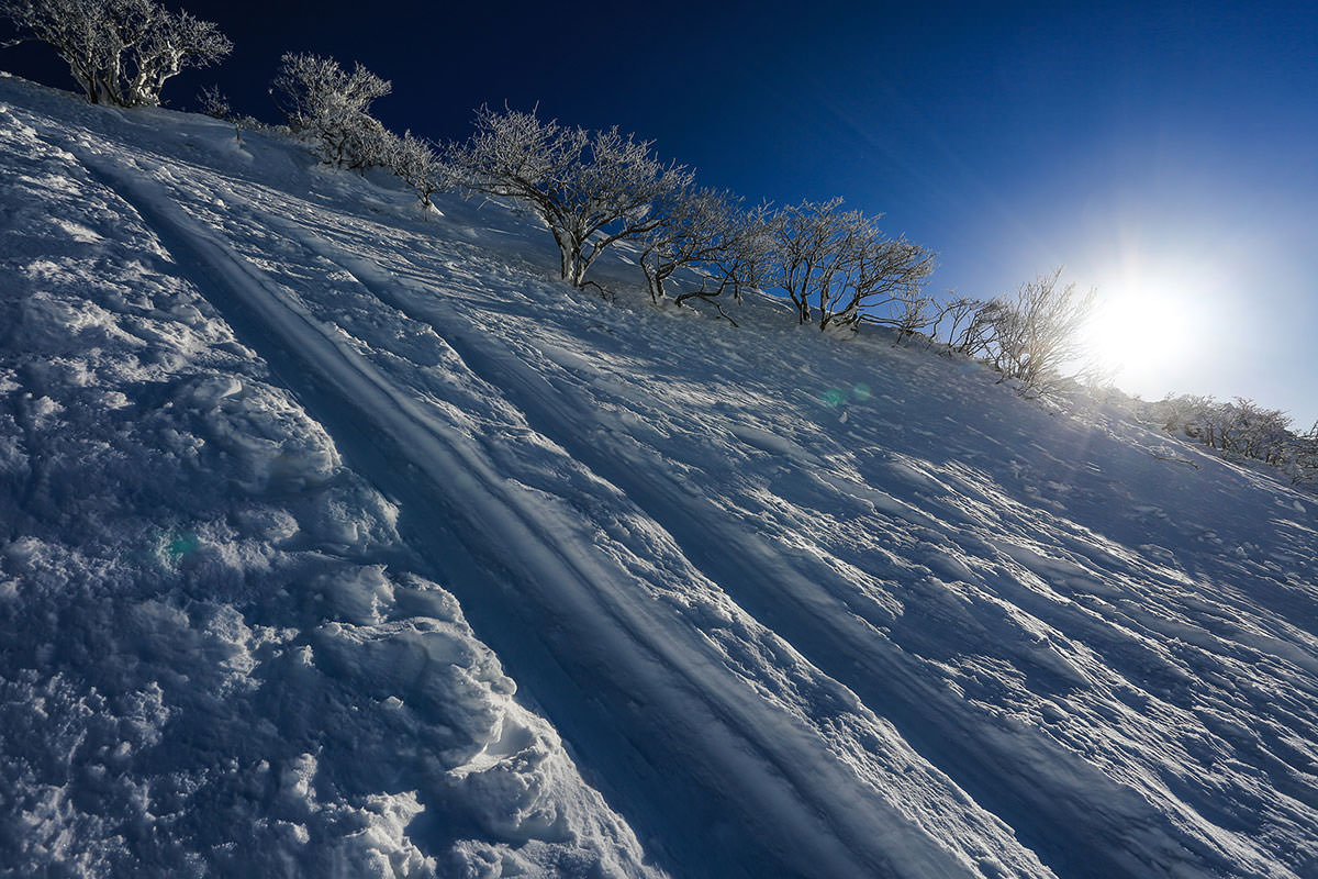 【伊吹山】登山百景-霧氷が映える