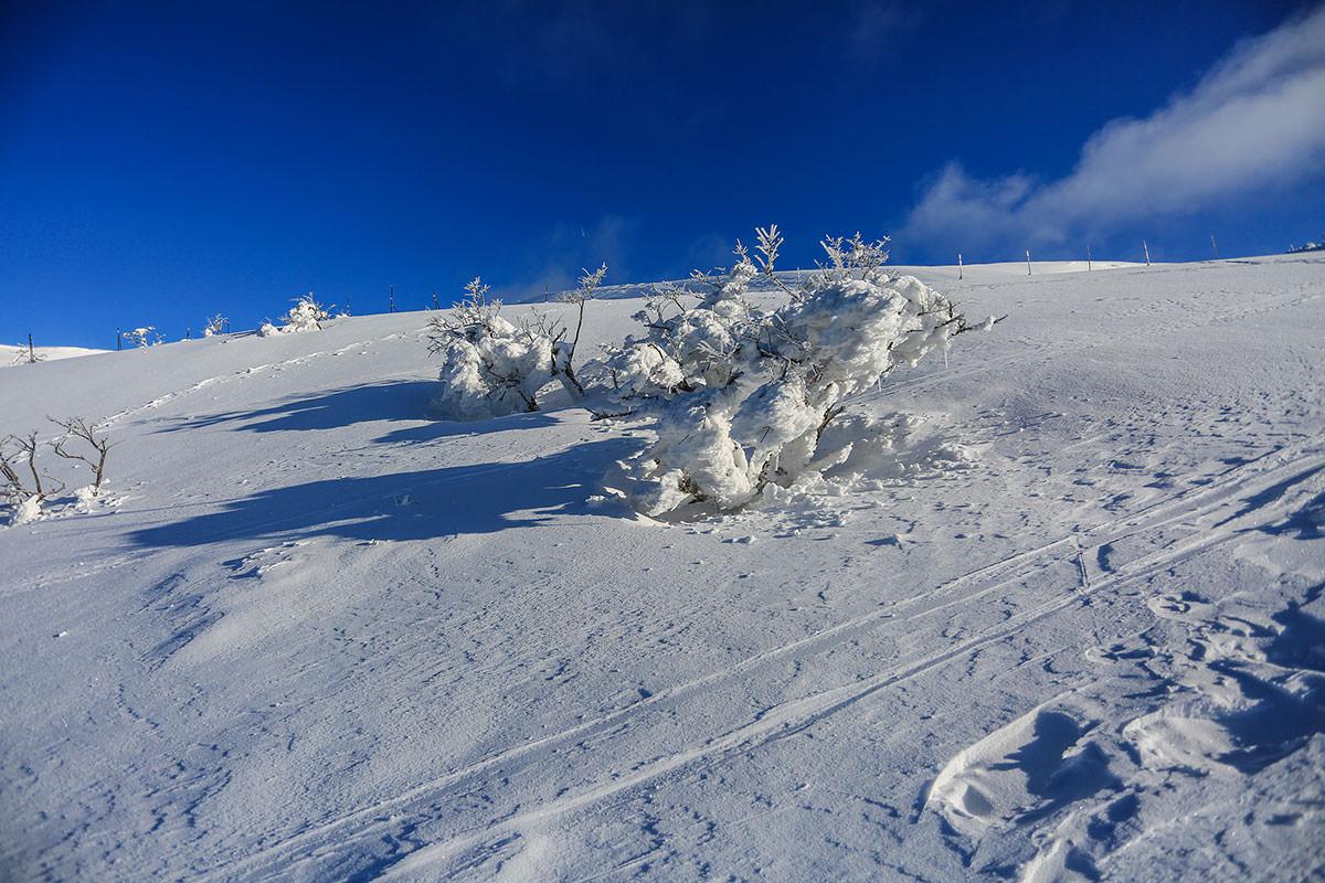 【伊吹山】登山百景-木に雪が着いてる