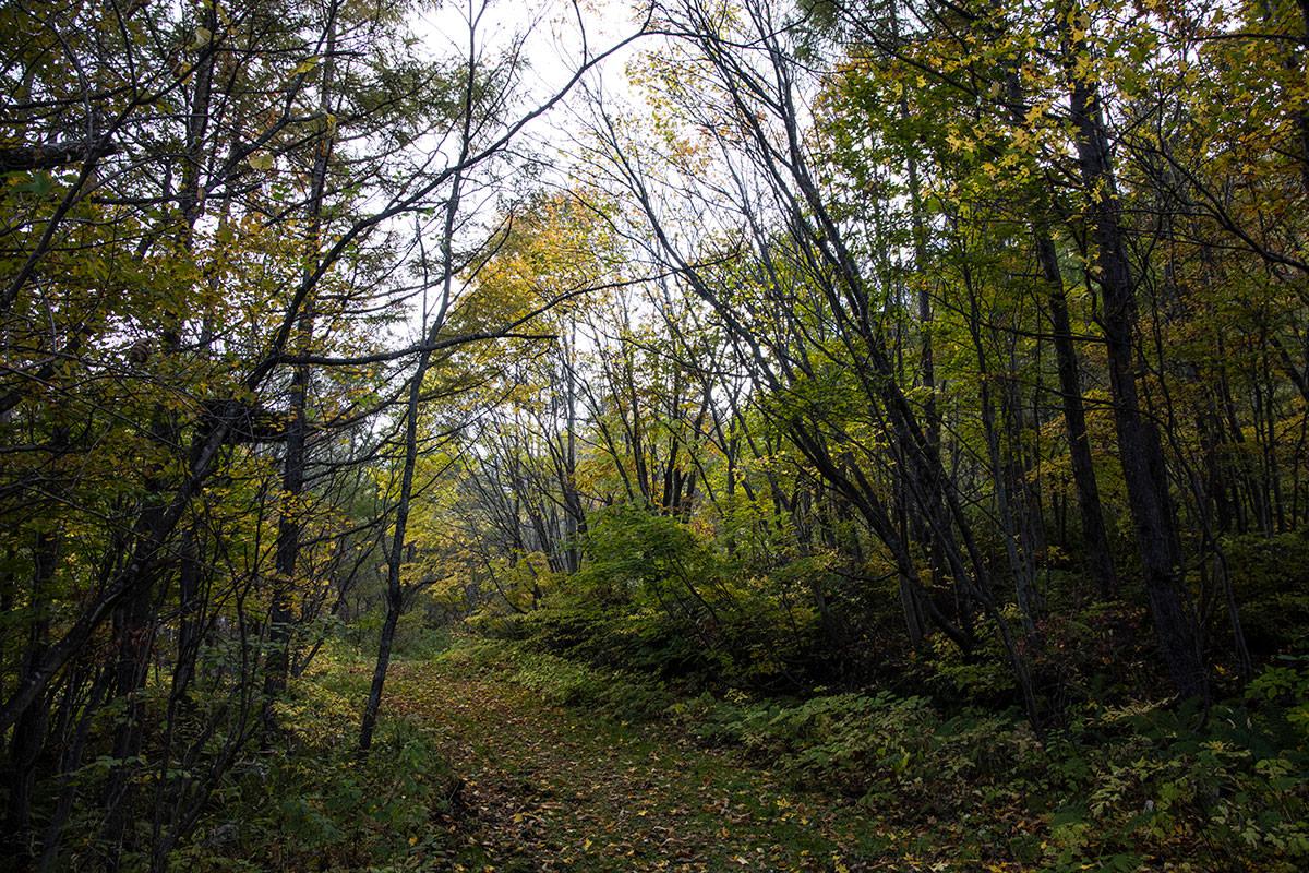 平坦な林道歩き