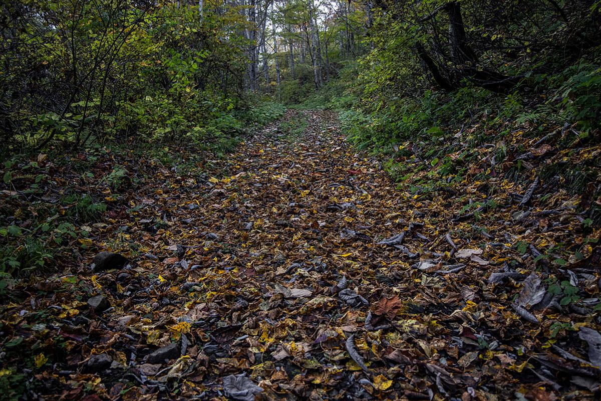 枯葉が落ちてて黄色がキレイ