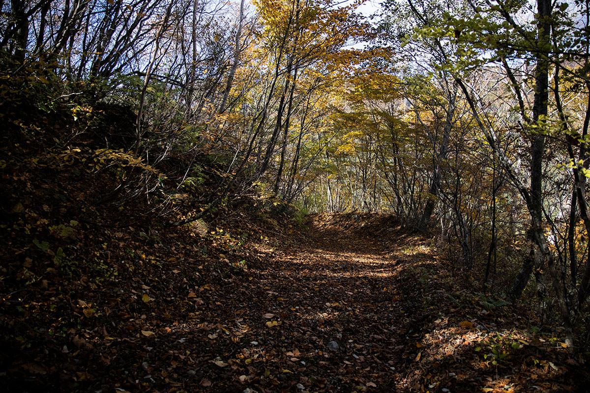 下りも登山道の葉っぱが華やか