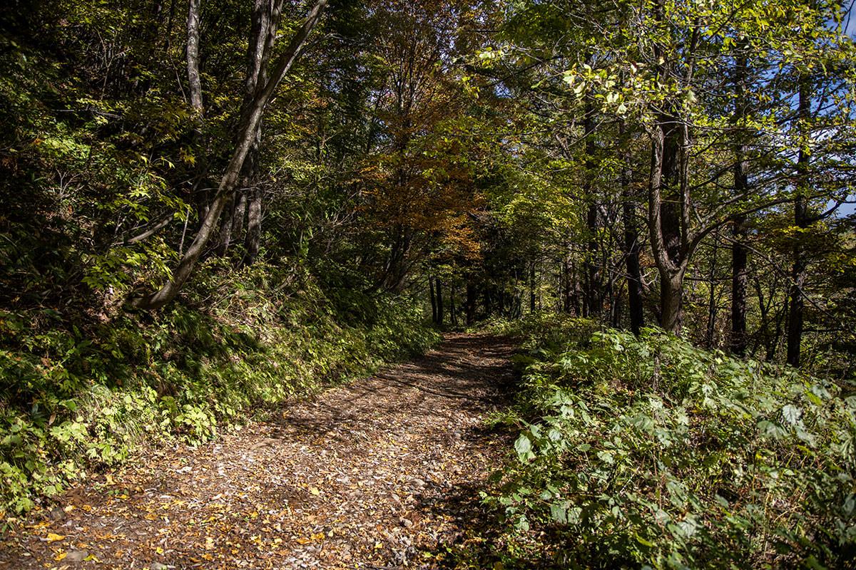 林道を歩いて下りる