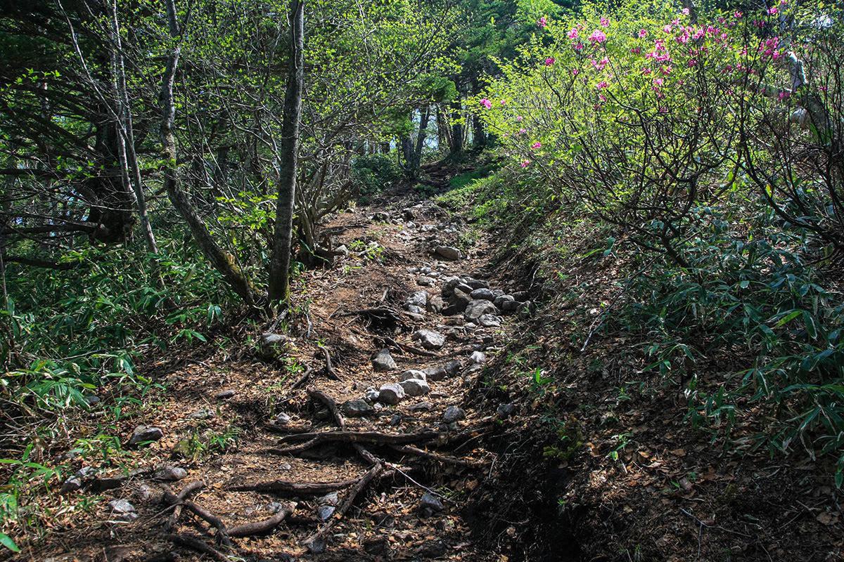 【飯縄山】登山百景-石が目立ってきた