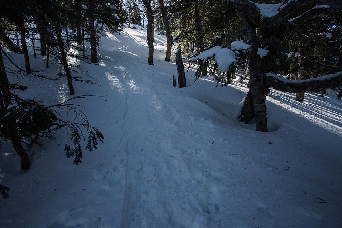 【硫黄岳 本沢温泉】登山百景-樹林帯を抜ける