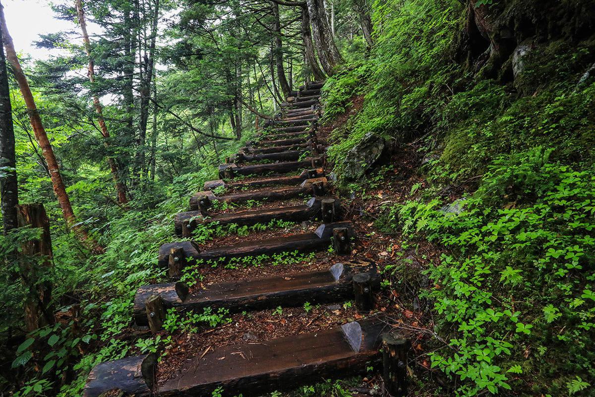 【岩菅山 聖平の上】登山百景-木段が続く