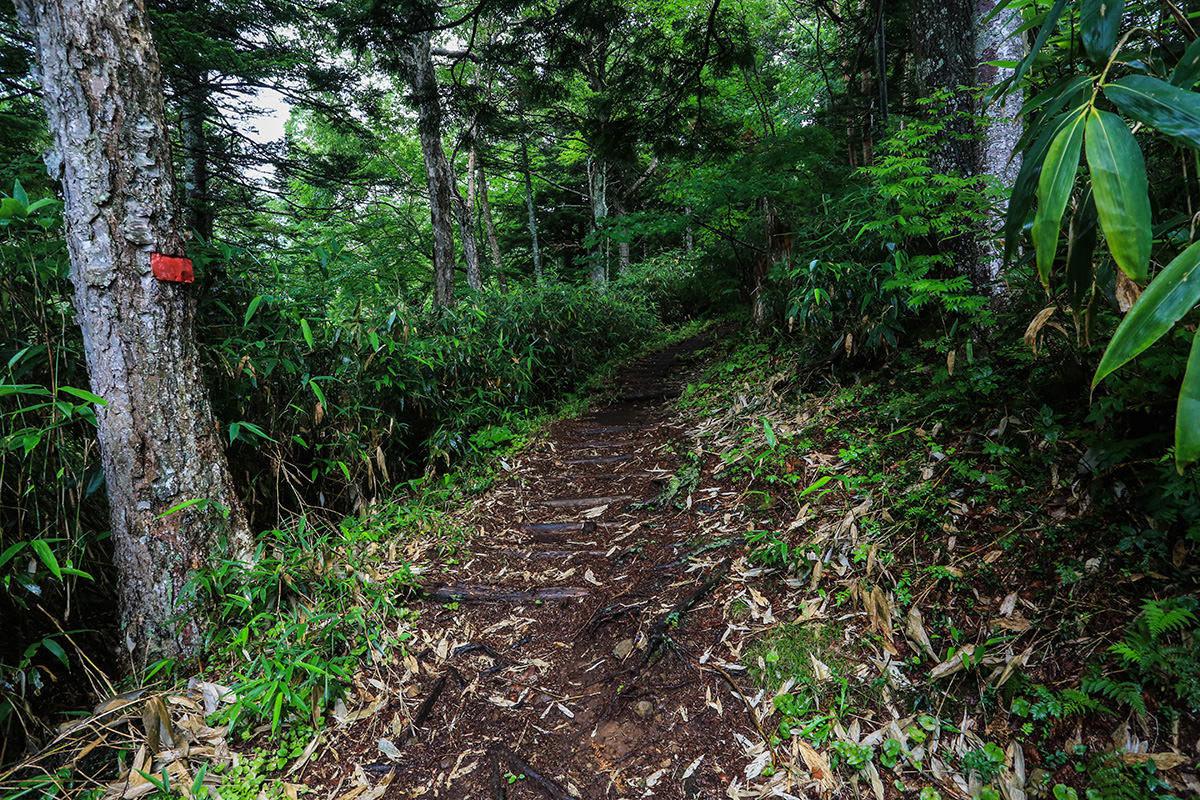 【岩菅山 聖平の上】登山百景-ひたすら木段