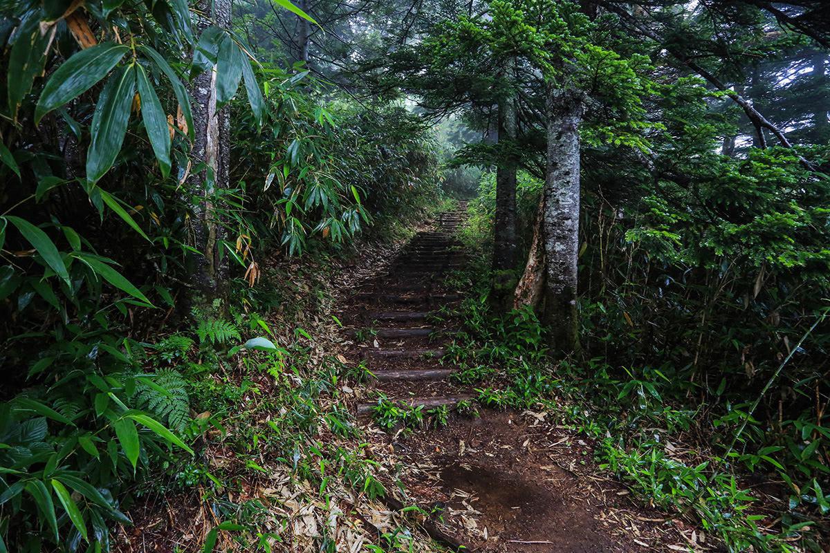 【岩菅山 聖平の上】登山百景-まだまだ木段