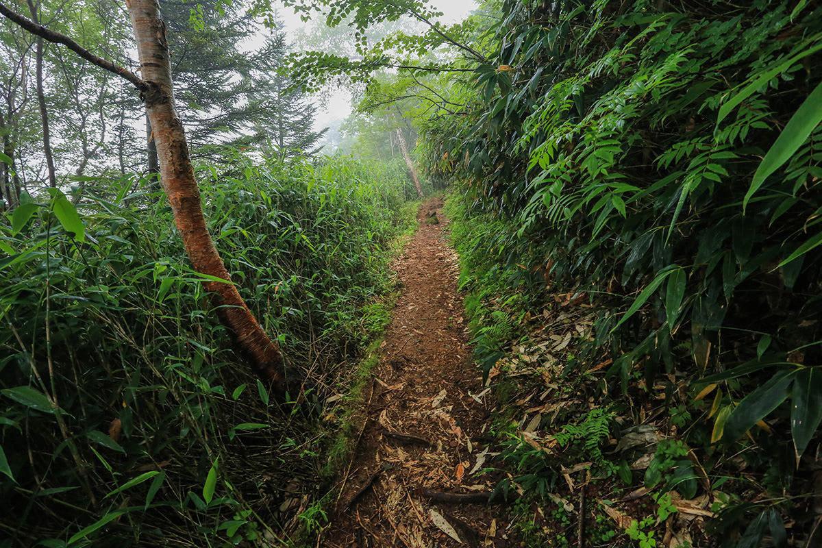 【岩菅山 聖平の上】登山百景-笹の多い登山道