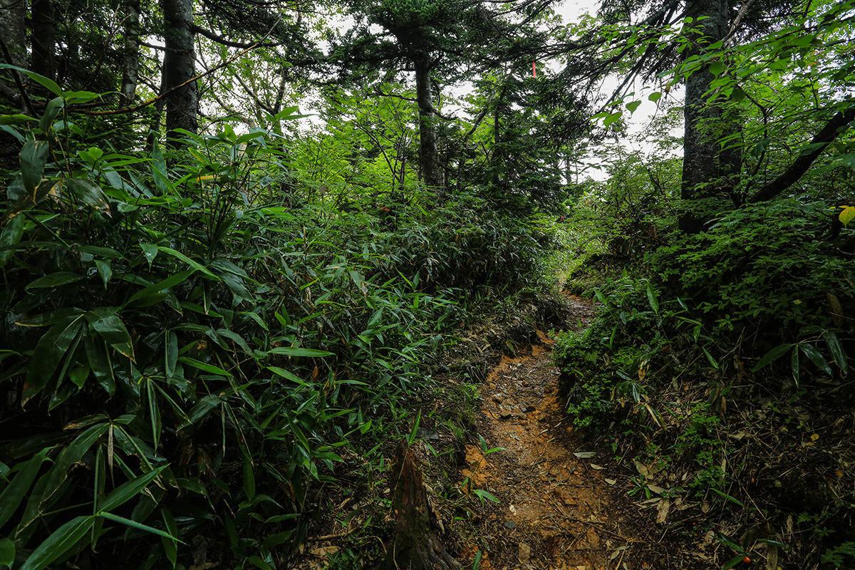 【岩菅山 聖平の上】登山百景-登山道は緑がいっぱい